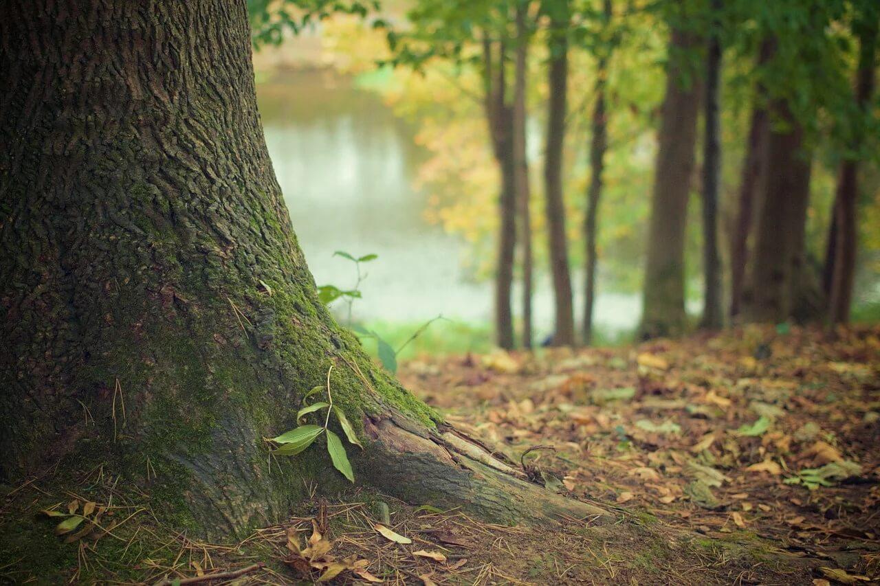 tree-trunk-569275_1280